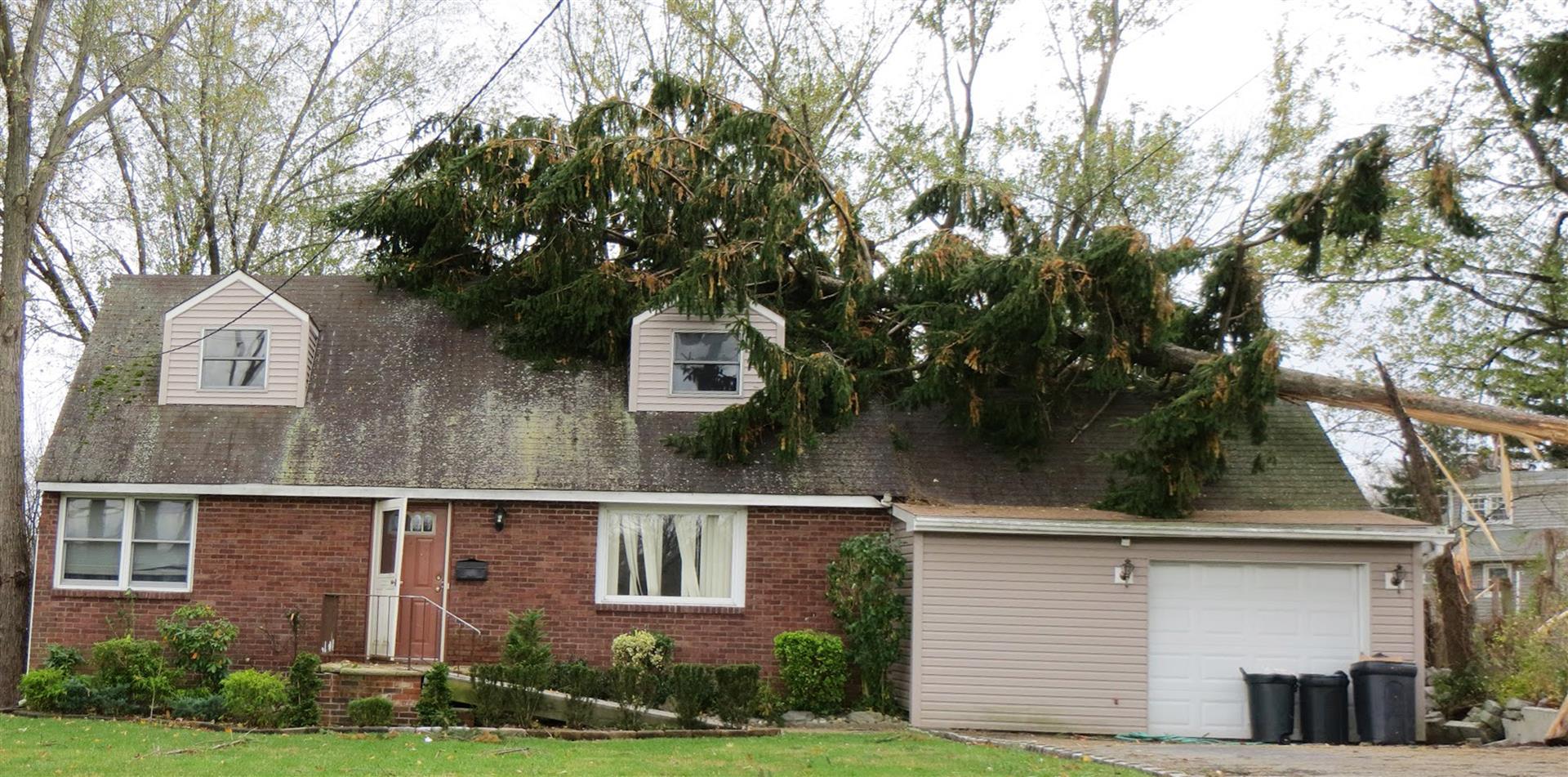 tree-storm-service