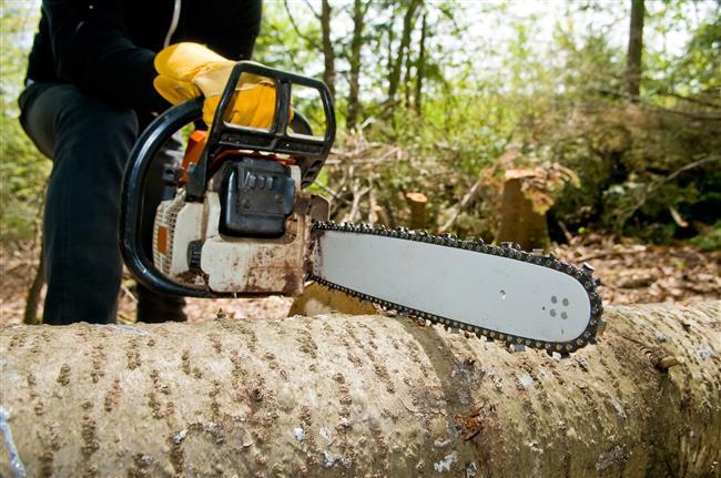 tree-care-service