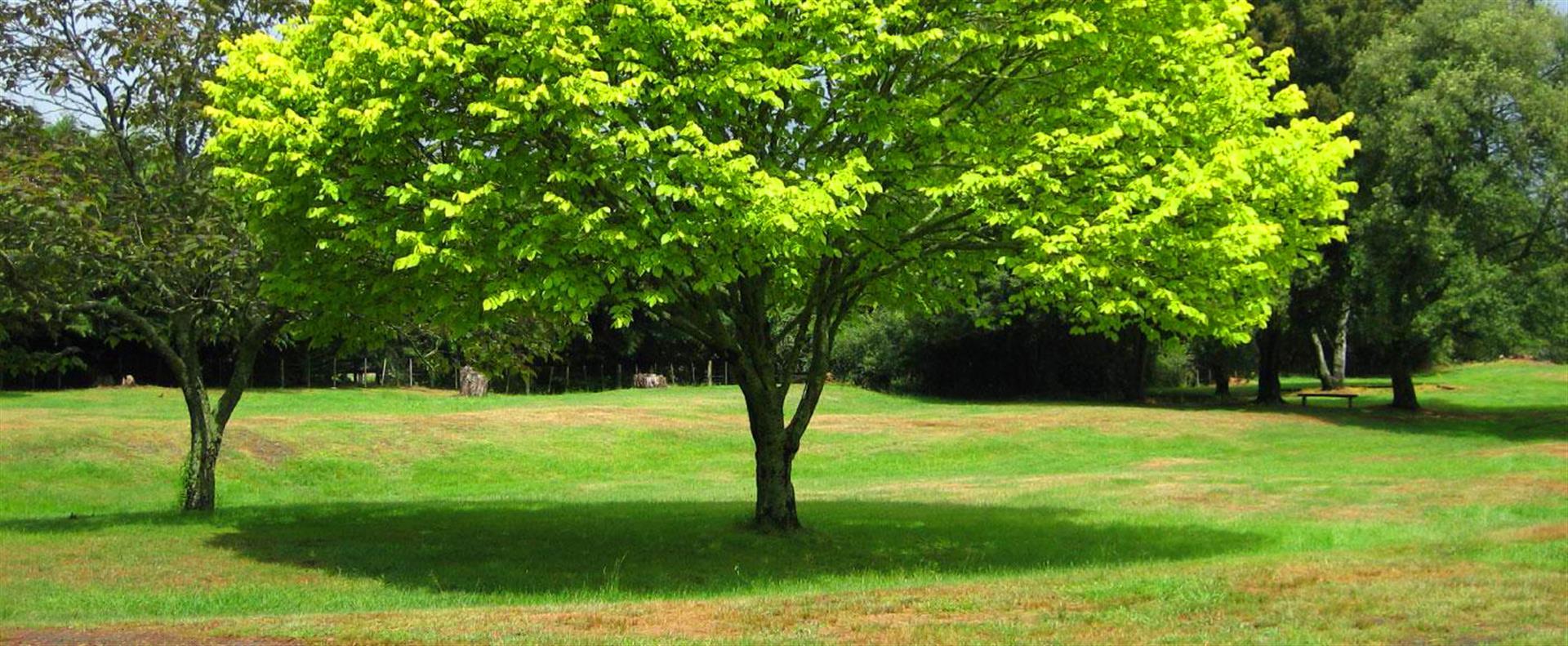 tree-health-assessment
