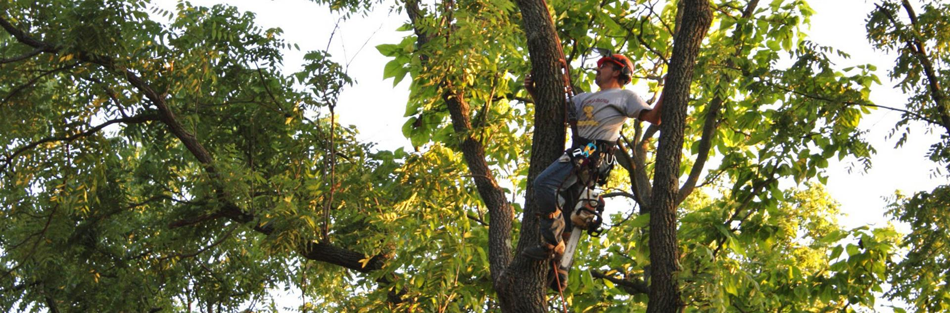 richmond-tree pruning